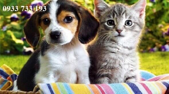 Cấm gửi chó mèo đi Macau